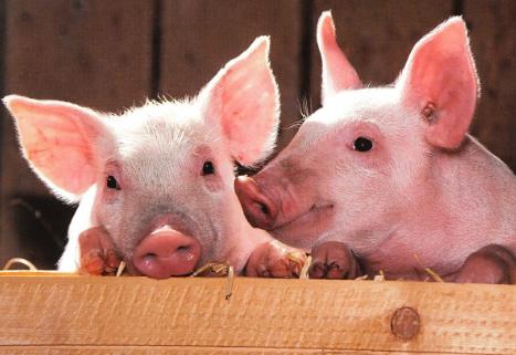 加强动物检疫 政策仪器共护公共卫生